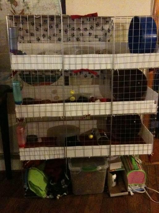 5-Diy-Hedgehog-Cage-For-$50
