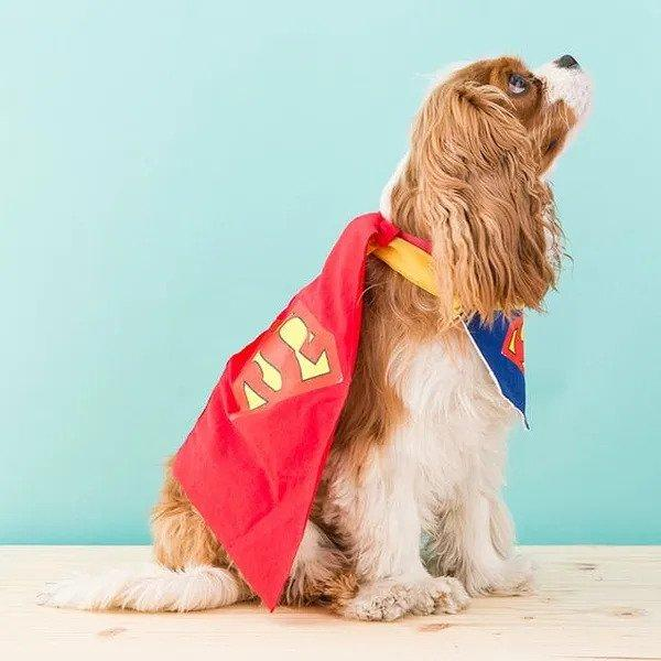 10-DIY-Dog-Superman-Costume