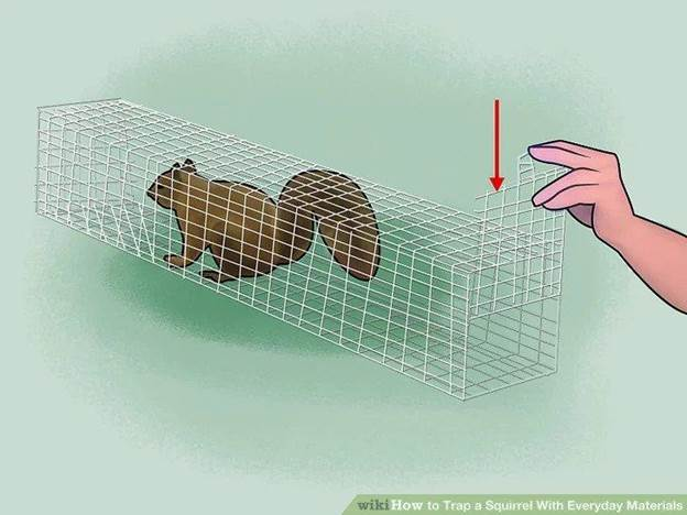 10-How-To-Trap-A-Squirrel-With-Everyday-Materials