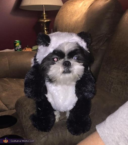 16-Puppy-Panda-Costume-Idea