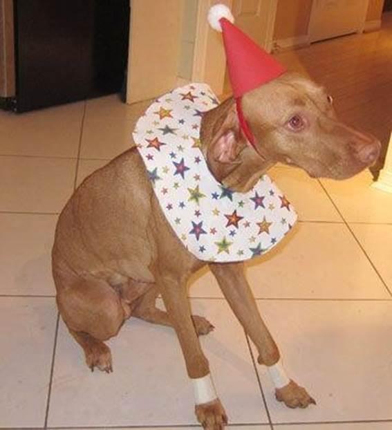 18-DIY-Dog-Clown-Costume