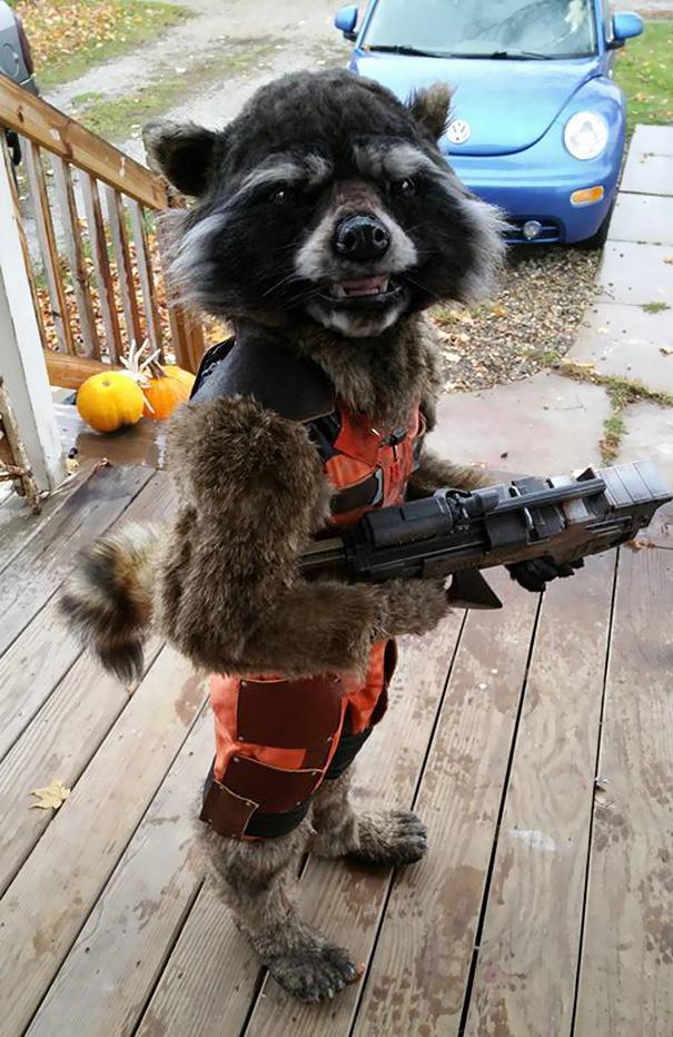 2-Kids-Rocket-Raccoon-Costume