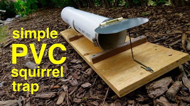 6-PVC-Humane-Capture-Squirrel-Trap