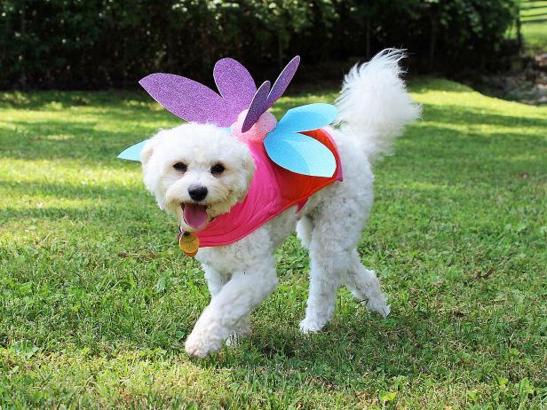 8-DIY-Pet-Fairy-Costume