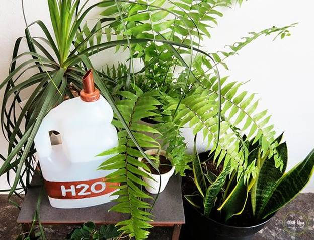 8-DIY-Recycled-Watering-Can
