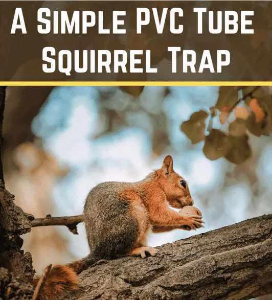 8-Simple-PVC-Tube-Squirrel-Trap