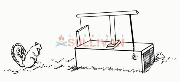 9-How-To-Make-A-Squirrel-Trap-In-Four-Ways