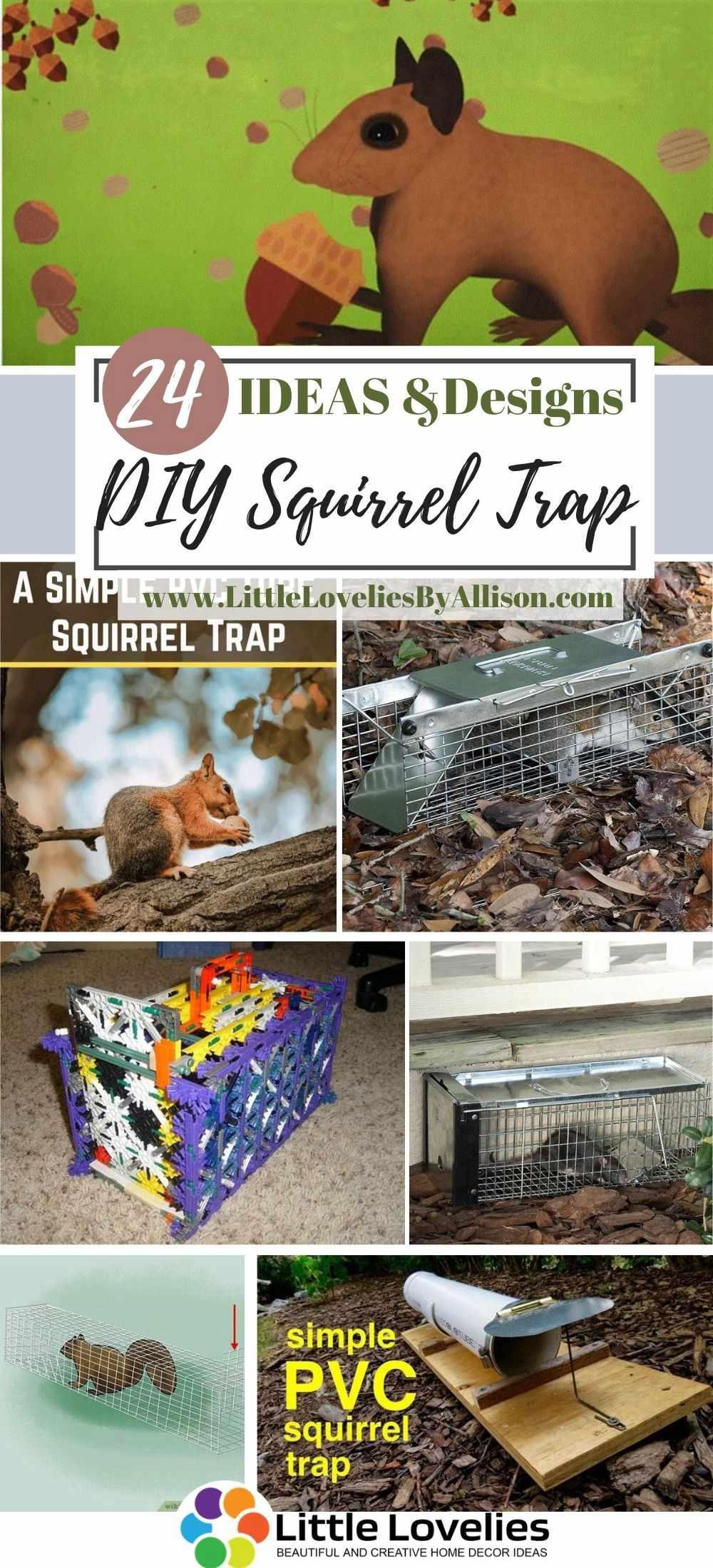 Best-DIY-Squirrel-Trap