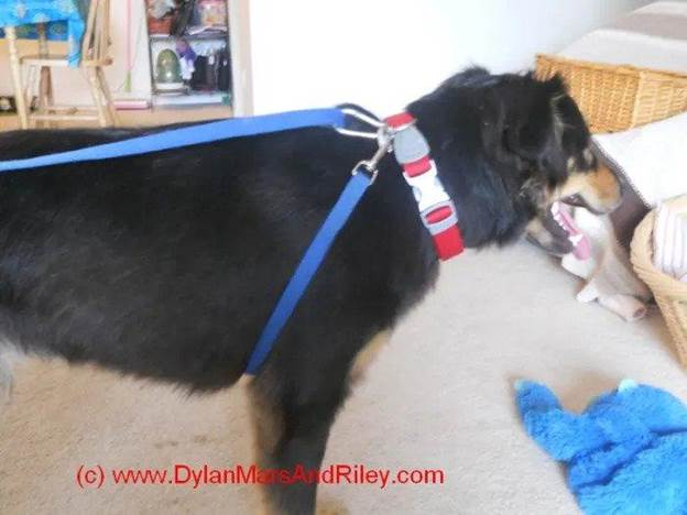 1-How-To-Make-A-No-Pull-Dog-Harness