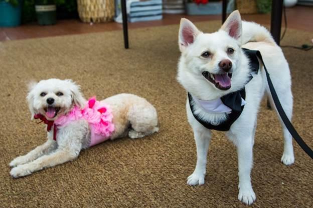 10-DIY-Dog-Wedding-Harnesses
