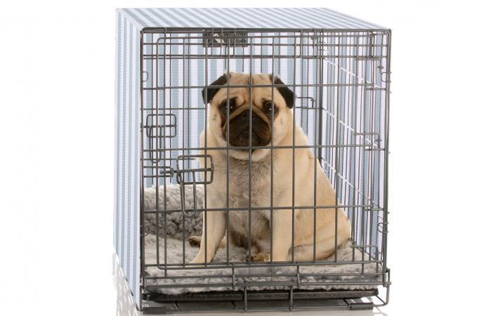 13-Great-Cover-for-Dog-Crates