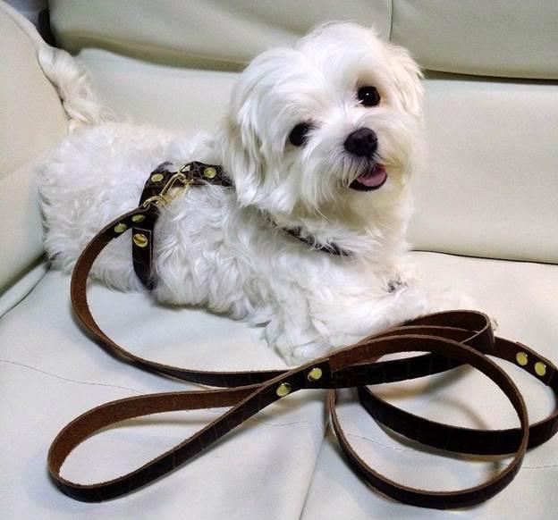 19-DIY-Leather-Dog-Harness