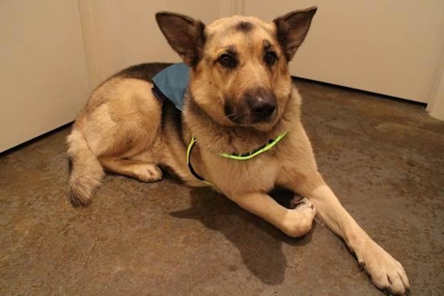 20-DIY-Light-up-Dog-Harness