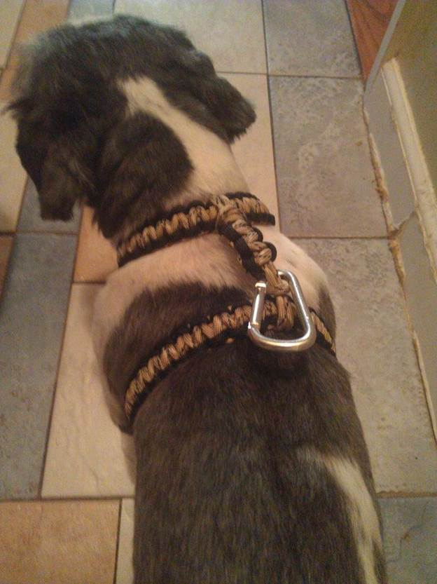 3-DIY-Paracord-Dog-Harness