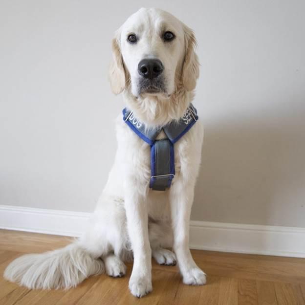 5-DIY-Custom-Dog-Harness