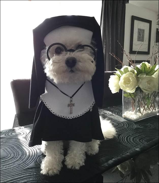 7. DIY Nun Dog Costume