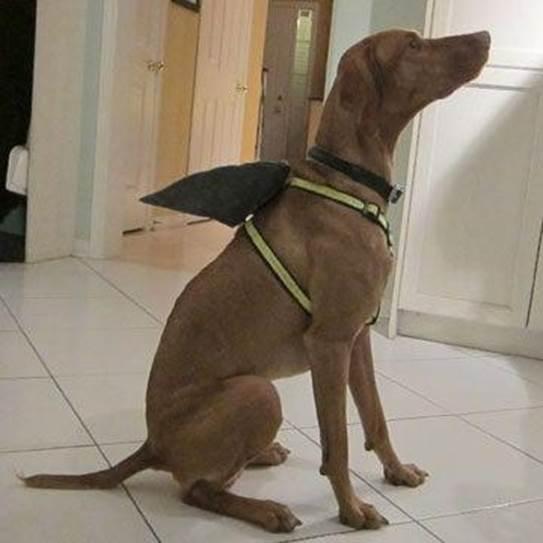 9-DIY-Shark-Fin-Dog-Harness