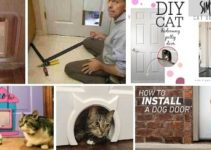 15 DIY Cat Door Ideas to Idealize at Home
