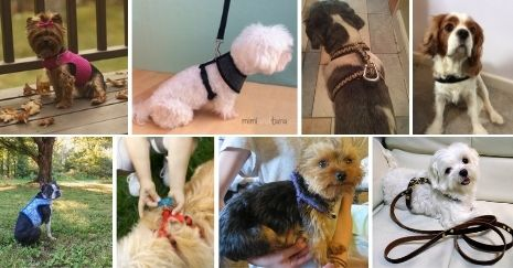 DIY-Dog-Harness-Projects