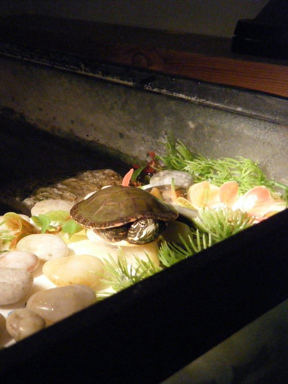 DIY Turtle Dock Projects