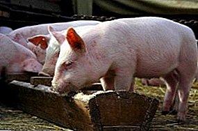 1-Homemade-Feeder-for-Pigs