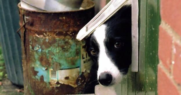1-How-To-Design-A-Doggie-Door
