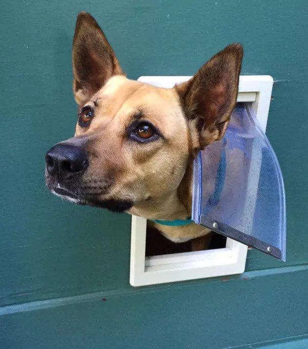 17-How-to-Make-a-Doggie-Door-Burglar-Proof