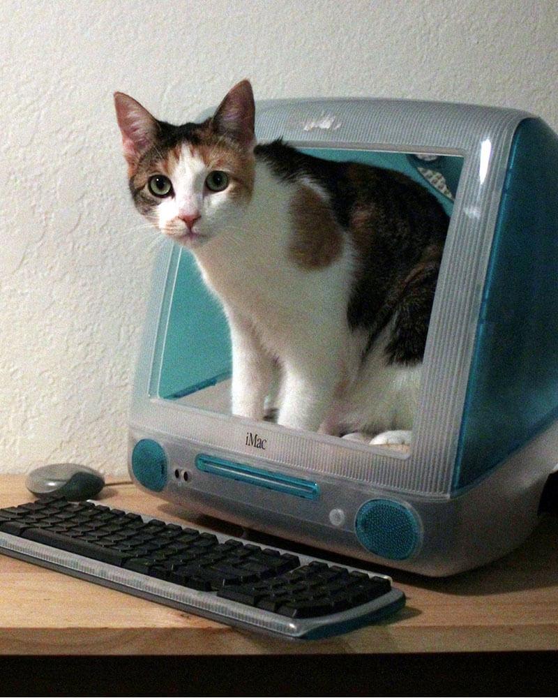 17-iMac-Bedding-for-Single-Cat
