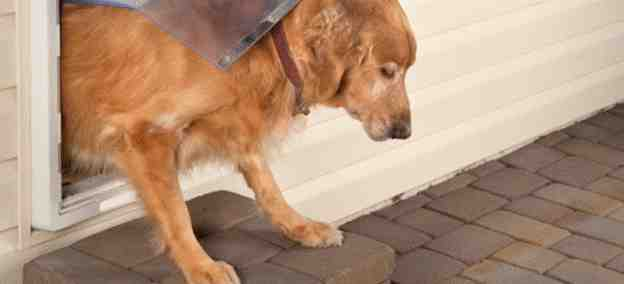 18-How-To-Build-A-Large-Dog-Door