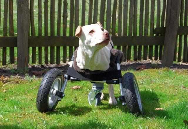 2-DIY-Dog-Wheelchair