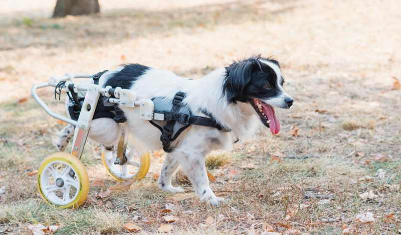 3-How-To-Make-A-Dog-Wheelchair
