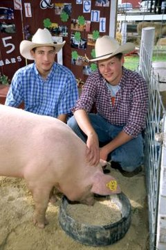 6-Easy-Pig-Feeder-Plan