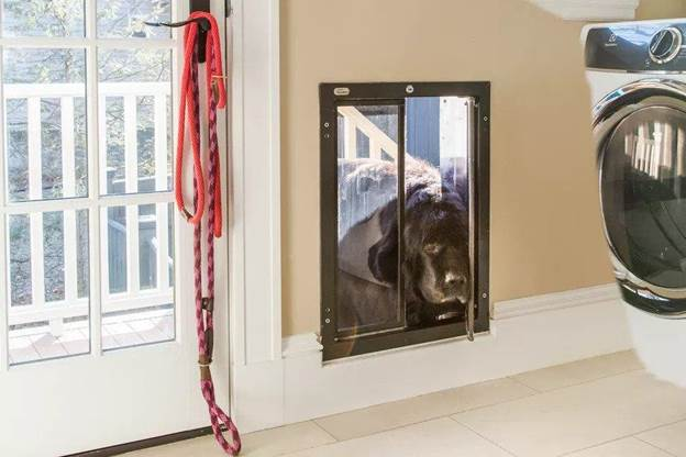 6-How-To-Make-A-Dog-Door-In-A-Wall