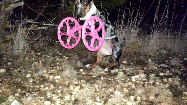 7-DIY-Dog-Wheelchair-Front-Legs