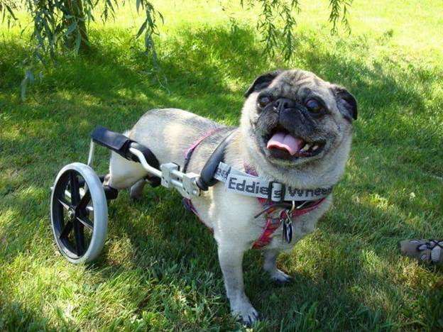 8-How-To-Make-A-Dog-Wheelchair