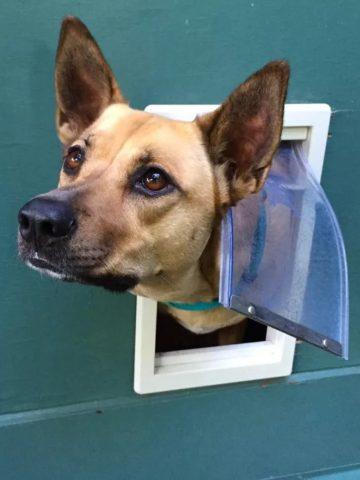 DIY Dog Door Projects