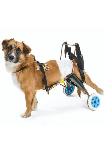 DIY Dog Wheelchair Plans