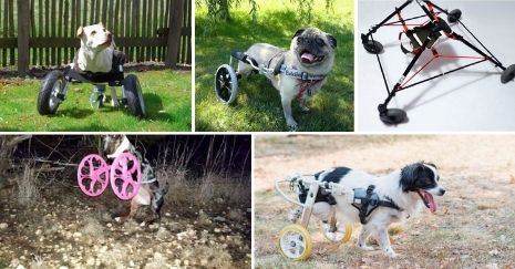 DIY-Dog-Wheelchair