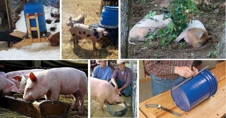 DIY-Pig-Feeder-Ideas