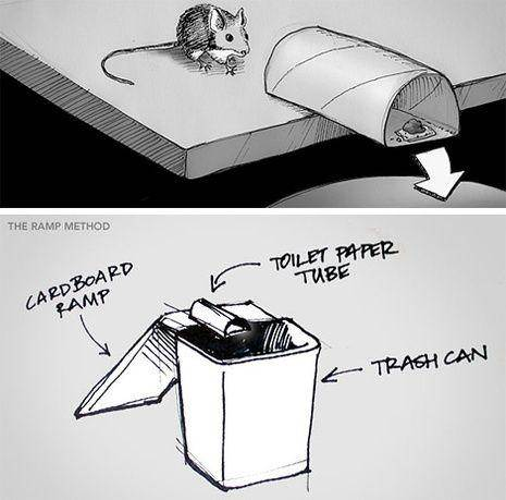 10-Homemade-Mouse-Trap-Toilet-Paper-Roll