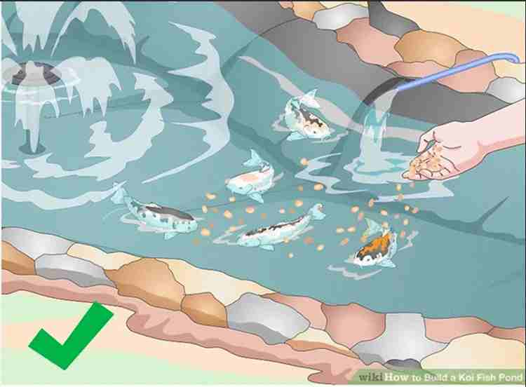 11-How-To-Build-A-Koi-Fish-Pond