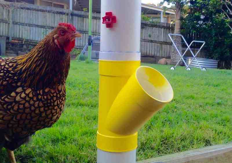 12-Secured-Chick-Waterer