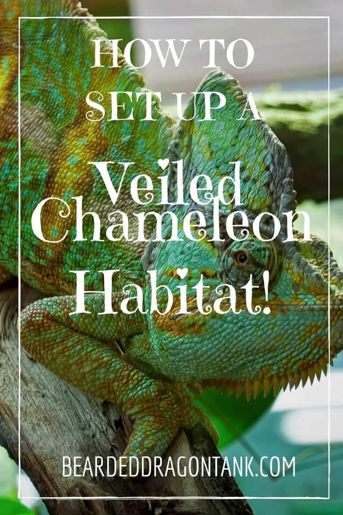 13. Veiled Caging for Chameleon