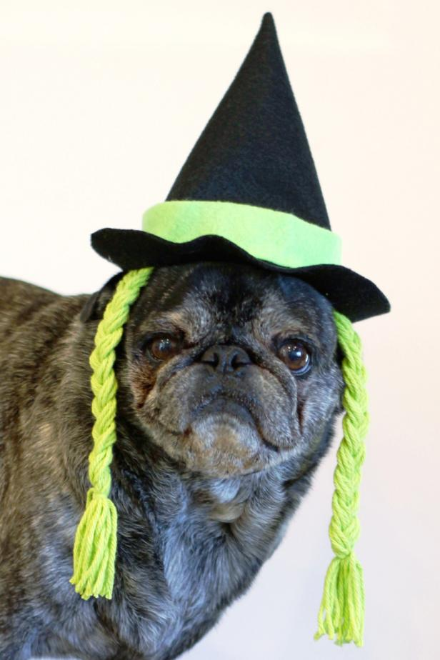 21. DIY Witch Hat For Dog