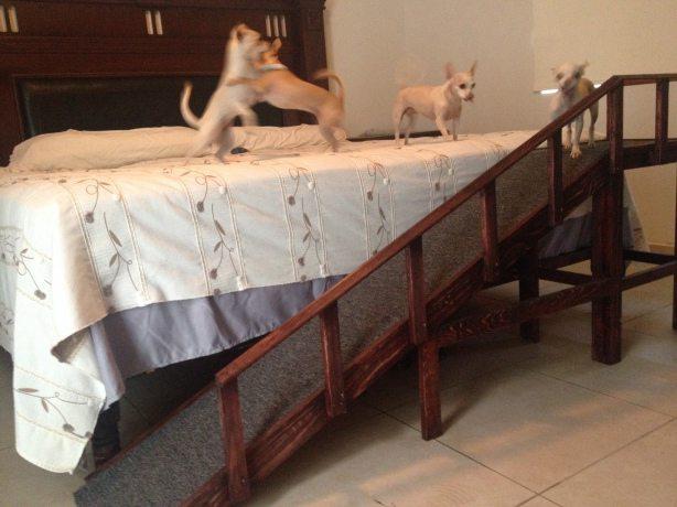 24. Dog Ramp with Guard Rail