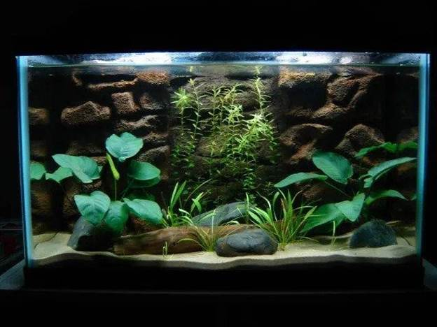 7. How To Make A Fish Tank Background