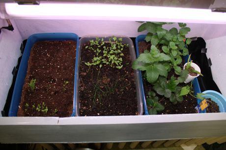 8-Indoor-UV-Grow-Box