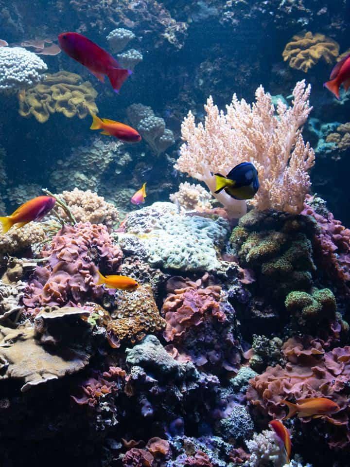 DIY Aquarium Background Ideas