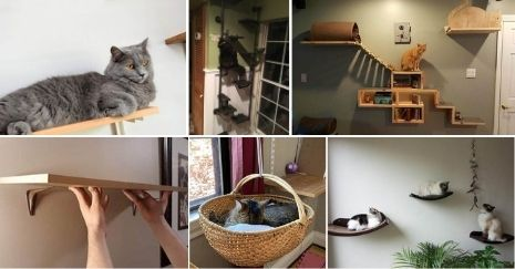 DIY-Cat-Shelves