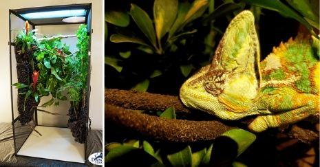 DIY Chameleon Cages